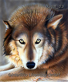 Sandi, REALISTIC ANIMALS, REALISTISCHE TIERE, ANIMALES REALISTICOS, paintings+++++apparition,USSN03,#a#, EVERYDAY ,wolf,wolves ,puzzles