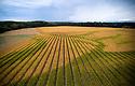 19/09/18 - CREVANT LAVEINE - PUY DE DOME - FRANCE - Zone d ecoulement des eaux dans une parcelle de mais semence  - Photo Jerome CHABANNE