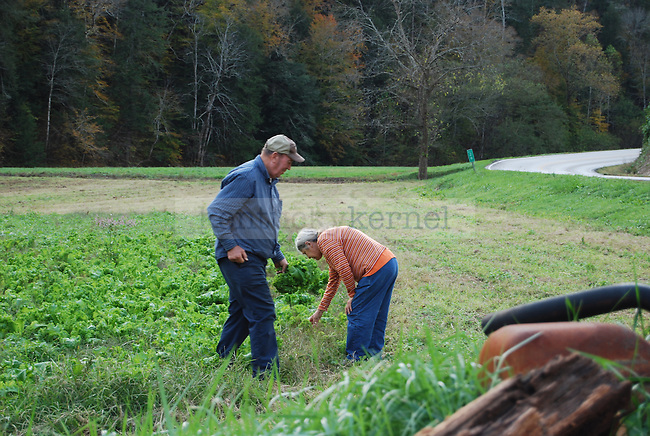 Ronnie and Janet Barnett picking mustard greens growing on their property near Rousseau, KY on October 14th, 2011. Photo by Lauryn Morris.