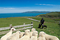 In 1988 Mike and Jane Curtis took over the grazing lease of a large rural block on Wellington's South coast in New Zealand, after farming it for 3 years, they purchased the farm known as Pencarrow Station. Today Pencarrow Lodge caters to tour groups, weddings, receptions and social functions.