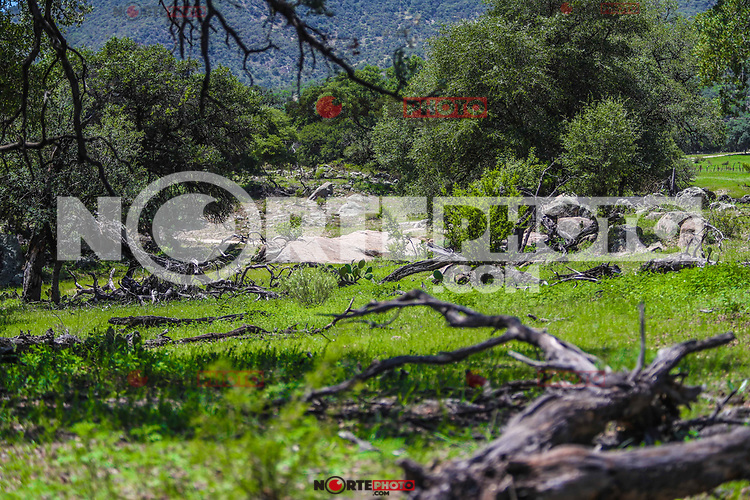 Green landscape and oak tree. Still life, Sierra Los Locos in the municipality of San Felipe de Jesús, Sonora, Mexico and Aconchi, during the Madrean Discovery Expedition (MDE) of the GreaterGood.org MDE organization<br /> (Photo: LuisGutierrez / NortePhoto.com)<br /> <br /> Paisaje verde y arbol encino. Naturaleza muerta,  Sierra Los Locos en el municipio de San Felipe de Jesús, Sonora, México y Aconchi, durante las Expedición Madrean Discovery (MDE)  de la organización GreaterGood.org MDE<br /> (Photo: LuisGutierrez / NortePhoto.com)