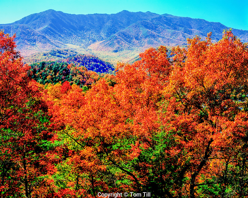 Maples and oaks, Great Smoky Mountains, Tennessee, Mt. Le Conte, Appalachian Mountains