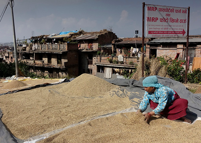Rice spread to dry on roadway near Kathmamdu.  In autumn rice is cut and dried, to be used for food later.