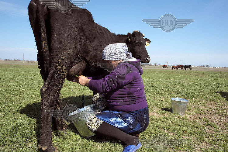 Sivila, an elderly women, milks a cow in her village, the last one before the Russian controlled border with the Crimea. She is a Meskhetian Turk, one of the many Turkic peoples oppressed and displaced across Central Asia during the Soviet era.