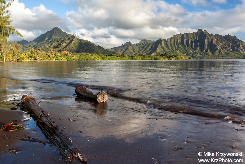 Driftwood along the shoreline of Kaneohe Bay w/ the Ko'olau mountains in the background, Waiahole, Oahu