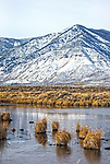 A photograph taken at the IVGID wetlands during the Eagles & Agriculture event on Friday, Jan. 26, 2018 in the Carson Valley.