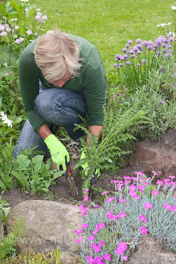 Gartenarbeit, Frau sticht eine Distel im Beet, Blumenbeet aus, Unkraut jäten, Unkrautjäten, Gartenpflege