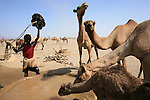 Precious wells are used to water thousands of camels