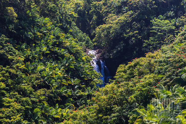 A waterfall surrounded by palm and flame trees along the Hamakua coast of the Big Island of Hawai'i.
