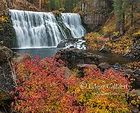 Dogwood, McCloud River Falls, Shasta-Trinity National Forest, California