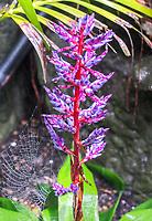 Pflanze im Dschungel im Aquarium von Palma de Mallorca - Palma de Mallorca 26.05.2019: Aquarium von Mallorca in Plama