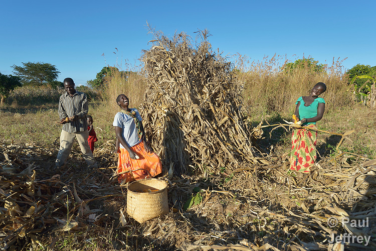 Jacob Mvula (left), Modesta Munyayi and Maureen Ngulube share laughter as they harvest corn in Edundu, Malawi. They and other farmers in the village have benefited from intercropping and crop rotation practices they learned from the Malawi Farmer-to-Farmer Agro-Ecology project of the Ekwendeni Mission Hospital AIDS Program, a program of the Livingstonia Synod of the Church of Central Africa Presbyterian.