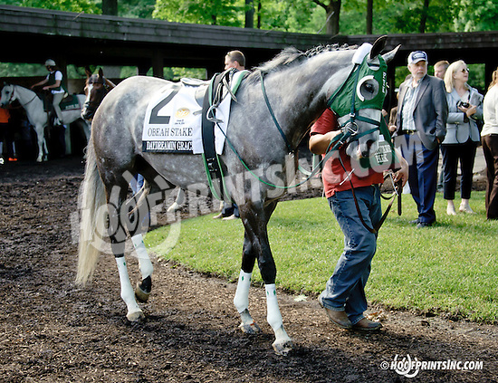Daydreamin Gracie before The Obeah Stakes (gr 3) at Delaware Park racetrack on 6/14/14