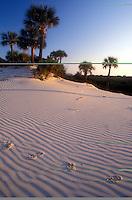 AJ1545, Cumberland Island, Georgia, sand, Animal tracks on the sand dunes on Cumberland Island National Seashore, Georgia.