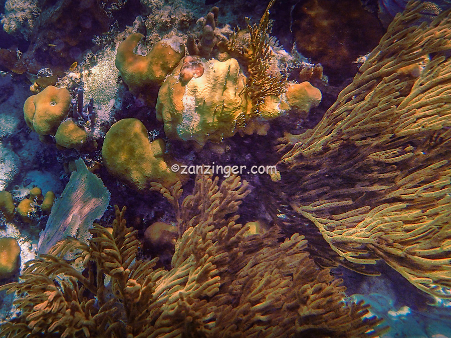 Mexico Rocks got its name in the 19th century. In 1845 during the Caste War, many Mexicans migrated to Ambergris Caye where they settled in front of the inner reef. Back then, it was abundant with mangroves and they saw it as a good fishing ground. Since Mexicans were the first to settle there, they gave it the name Mexico Rocks and the name hasn't changed since