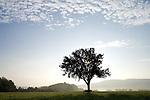 Europa, DEU, Deutschland, Rheinland Pfalz, Naturpark Saar-Hunsrueck, Typische Landschaft, Huegel, Morgens bei Sonnenaufgang, Baum, Obstbaum, Apfelbaum, Silhouette, Nebel, Dunst, Kategorien und Themen, Natur, Umwelt, Landschaft, Jahreszeiten, Stimmungen, Landschaftsfotografie, Landschaften, Landschaftsphoto, Landschaftsphotographie, Wetter, Himmel, Wolken, Wolkenkunde, Wetterbeobachtung, Wetterelemente, Wetterlage, Wetterkunde, Witterung, Witterungsbedingungen, Wettererscheinungen, Meteorologie, Bauernregeln, Wettervorhersage, Wolkenfotografie, Wetterphaenomene, Wolkenklassifikation, Wolkenbilder, Wolkenfoto....[Fuer die Nutzung gelten die jeweils gueltigen Allgemeinen Liefer-und Geschaeftsbedingungen. Nutzung nur gegen Verwendungsmeldung und Nachweis. Download der AGB unter http://www.image-box.com oder werden auf Anfrage zugesendet. Freigabe ist vorher erforderlich. Jede Nutzung des Fotos ist honorarpflichtig gemaess derzeit gueltiger MFM Liste - Kontakt, Uwe Schmid-Fotografie, Duisburg, Tel. (+49).2065.677997, ..archiv@image-box.com, www.image-box.com]