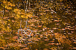 Leaves and reflections in the Rachel Carson NWR, Wells, ME