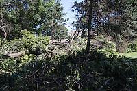 White Bear Lake Township storm damage - July 18, 2015