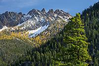 Silver Star Mt in autumn, Washington