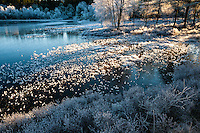 Norway, Sandnes. Winter in Rogaland Arboretum.