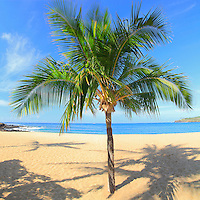 Lone palm tree in the sand at Hulapoe Beach, Lana'i, Hawaii.