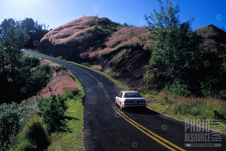 Road to Waimea Canyon and Kokee State Park, West coast, Kauai