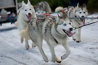 21/01/2012 Snow Dogs