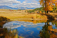Golden aspen, blues sky and white clouds reflecting off a pond in the fall in the Tobacco Valley Montana