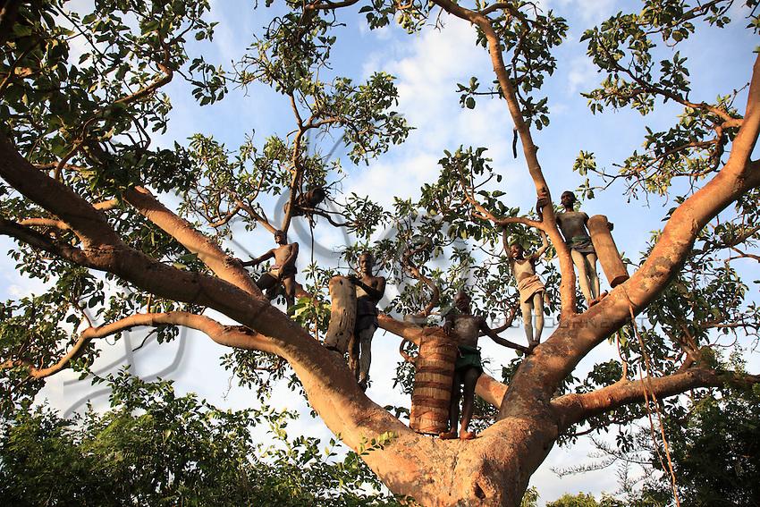 In the land of the Bana tribe, ownership of the hive trees predates land ownership: the Banas have been farmers for only 10 years now./// Dans le pays de la tribu Bana, la propriété des arbres à ruche est antérieure à celle de la terre. Les Banas ne sont agriculteurs que depuis 10 ans.