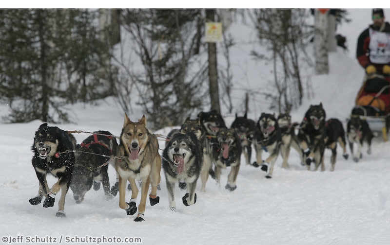 Lance Mackey and dogs on the trail during the Iditarod restart on Sunday in Willow, Alaska