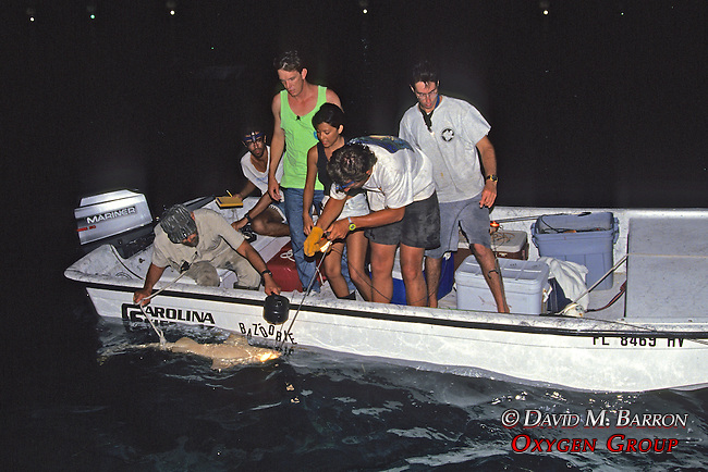 Sam Gruber & Jean Working Up Lemon Shark With Aya, Jon, Rick Kirkham & Joao