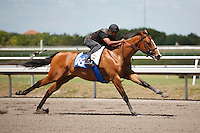 #88Fasig-Tipton Florida Sale,Under Tack Show. Palm Meadows Florida 03-23-2012 Arron Haggart/Eclipse Sportswire.