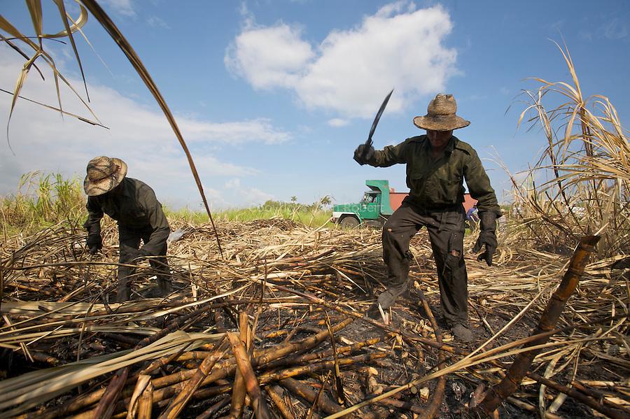 sugar can field nearby La Habana