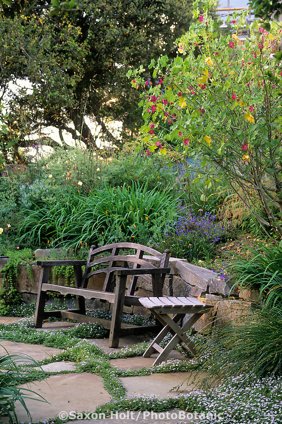 California garden with bench on stone patio.