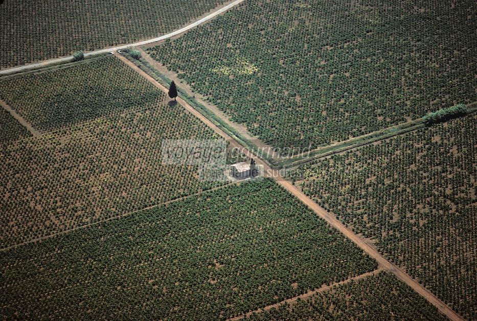 Europe/France/Languedoc-Roussillon/11/Aude/AOC Corbières: Le vignoble - parcelles de vignes en vue aérienne