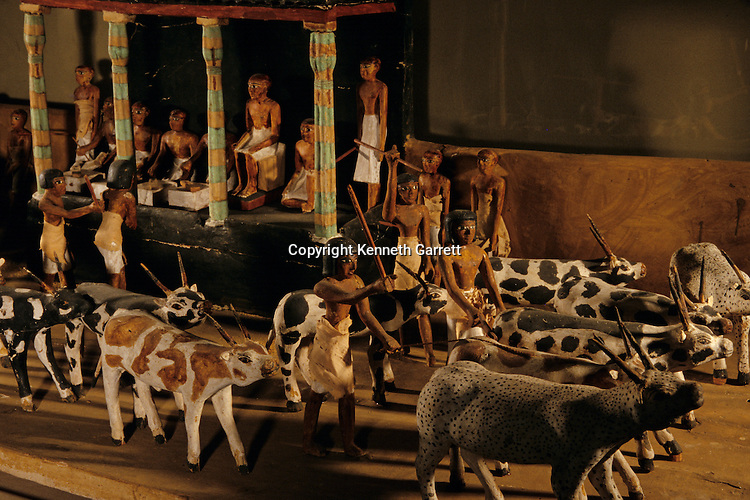 Wood model of cattle procession, livestock census,  from tomb of Meketre, chancellor, c. 2100 B.C., from Deir Al-Bahari, Egyptiam Museum, Cairo,  Egypt of the Pharaohs