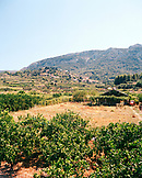 CROATIA, Dalmatian coast, view of vineyard with mountain in the background on the island of Hvar.