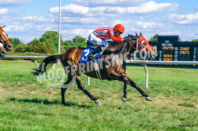 Sea Treaty winning at Delaware Park on 9/7/16