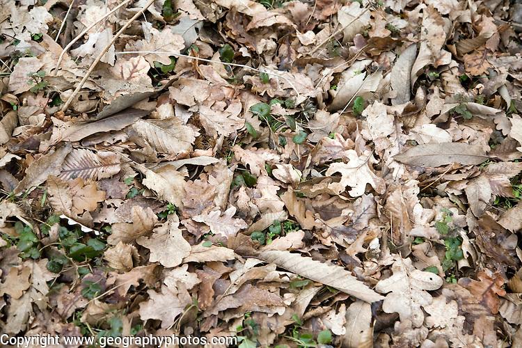 Brown autumn leaf litter on ground