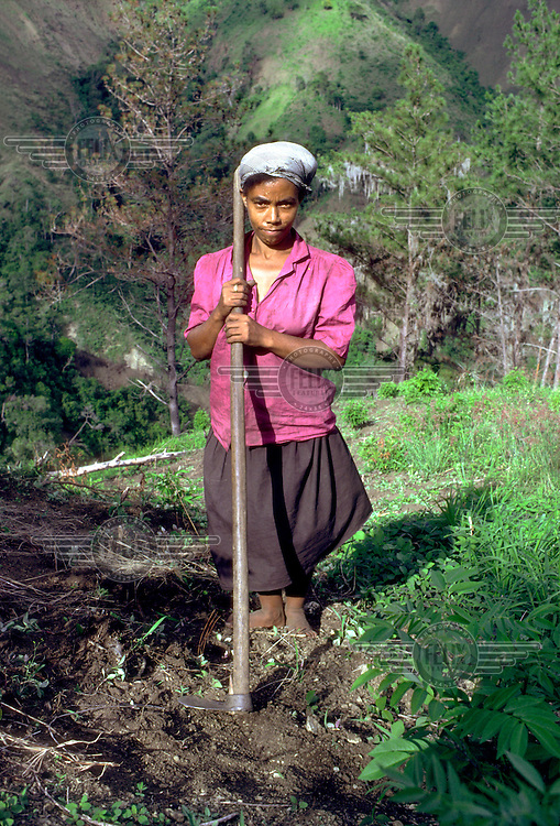DOMINICAN REPUBLIC.A young woman works on her family's hillside smallholding .