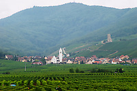 vineyard katzenthal alsace france