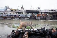 A monkey sits near burning ghats at Pashupati Nath temple in Kathmandu, Nepal