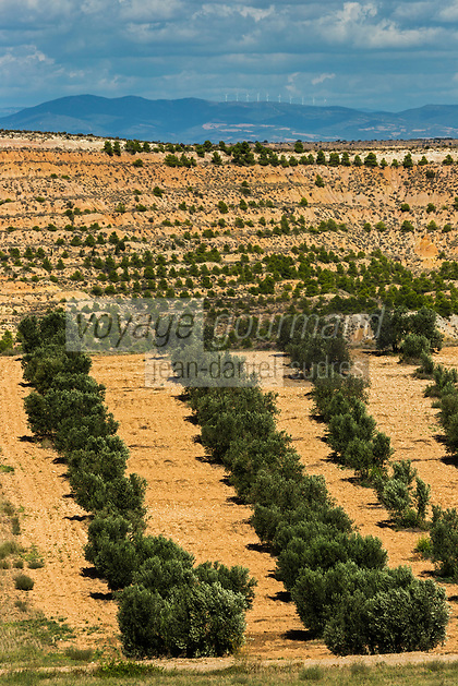 Europe, Espagne, Navarre, env d'Arguedas: Parc Naturel des Bardenas Reales, secteur d'El Plano, terres irriguées dans le désert, oliveraie // Spain, Navarre, near Arguedas: Bardenas Reales Natural Park, El Plano aera, irrigated land in the desert , olive grove