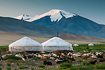 Goat herd and yurts, Altai Mountains, Mongolia