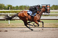 #153Fasig-Tipton Florida Sale,Under Tack Show. Palm Meadows Florida 03-23-2012 Arron Haggart/Eclipse Sportswire.