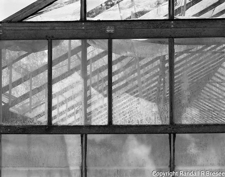 &quot;Ceiling Supports&quot; Gibson Greenhouses, Maryville, Tennessee<br /> <br /> Light streams through the greenhouse roof to illuminate plants below as this black and white photograph shows.
