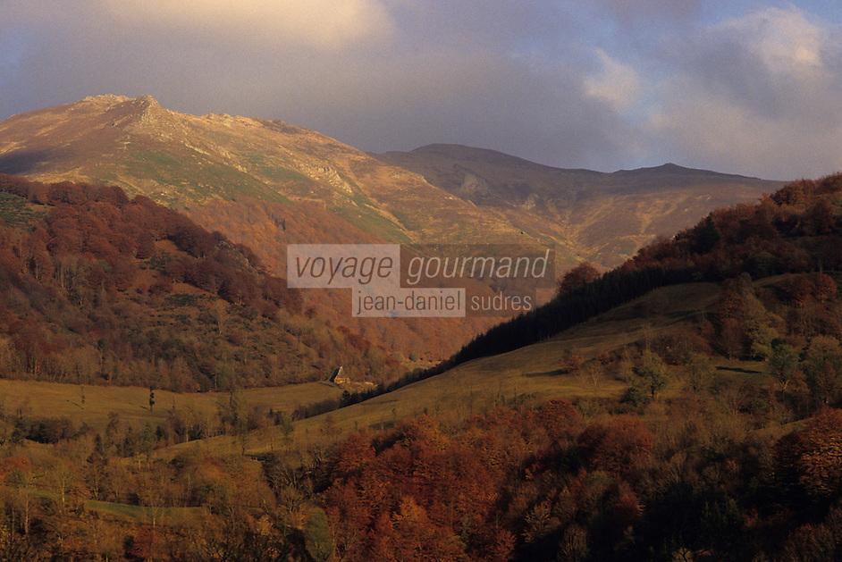 Europe/France/Auvergne/15/Cantal/Env de Saint-Jacques des Blats: Le massif du plomb du Cantal (1855 mètres)