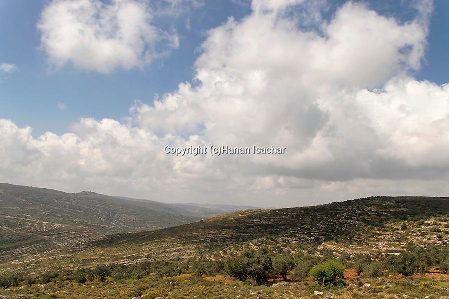 Samaria, Olive trees near Barkan