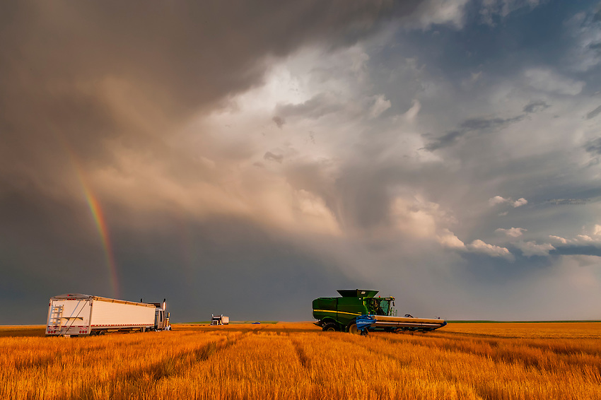 Wheat harvest, Schields & Sons Farming, Goodland, Kansas USA.