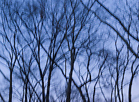 AVAILABLE FROM JEFF FOR COMMERCIAL OR EDITORIAL LICENSING.<br /> <br /> Trees in Central Park on a Late Winter Afternoon, New York City, New York State, USA